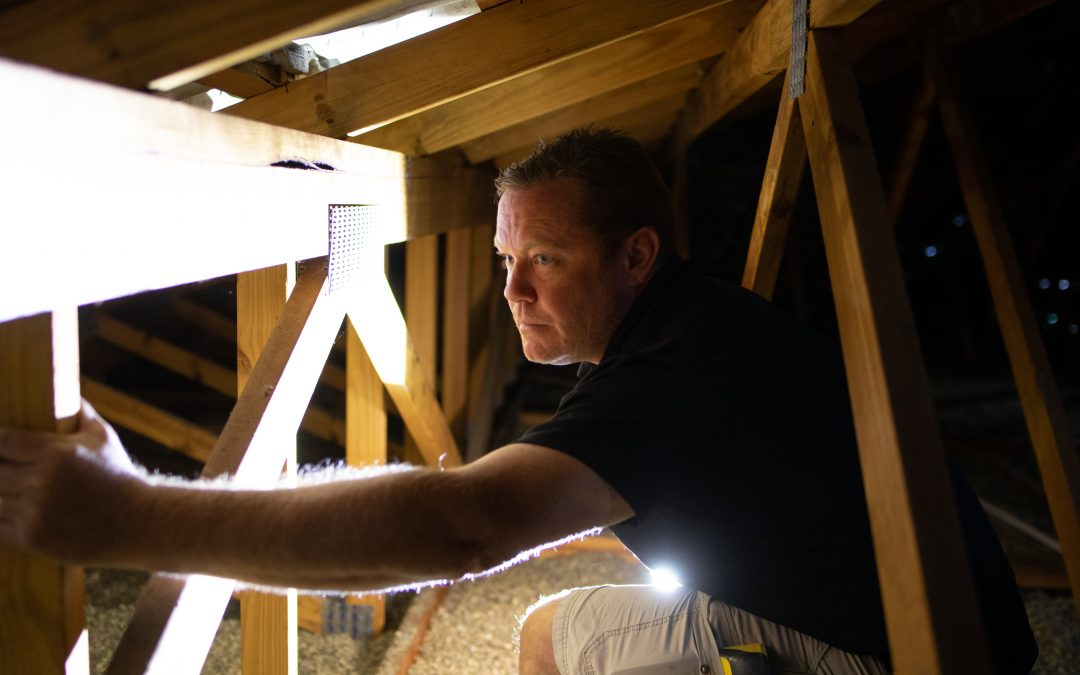 6 things to look for during a building and pest inspection